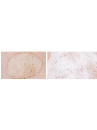 Кокосовый гель-скраб для тела The Yeon Coconut Body Scrub Wash
